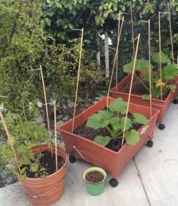Container Veggie Garden